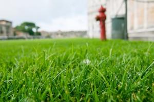 Prato verde nel giardino