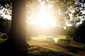 Risveglio del parco