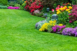 Rasen, Tulpen, Garten