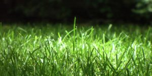 Green Grass at Night Twitter Headers & Twitter Covers