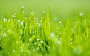 wet-grass-14